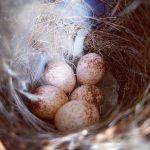 華人在家避疫1個月  門上花環「長出鳥巢和鳥蛋」