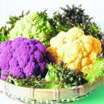 研究:日喝半杯花椰菜苗菜汁 有效抗空汙排出體內的苯