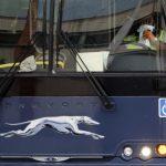 允許邊巡隊上車抓無證移民 華州告灰狗巴士