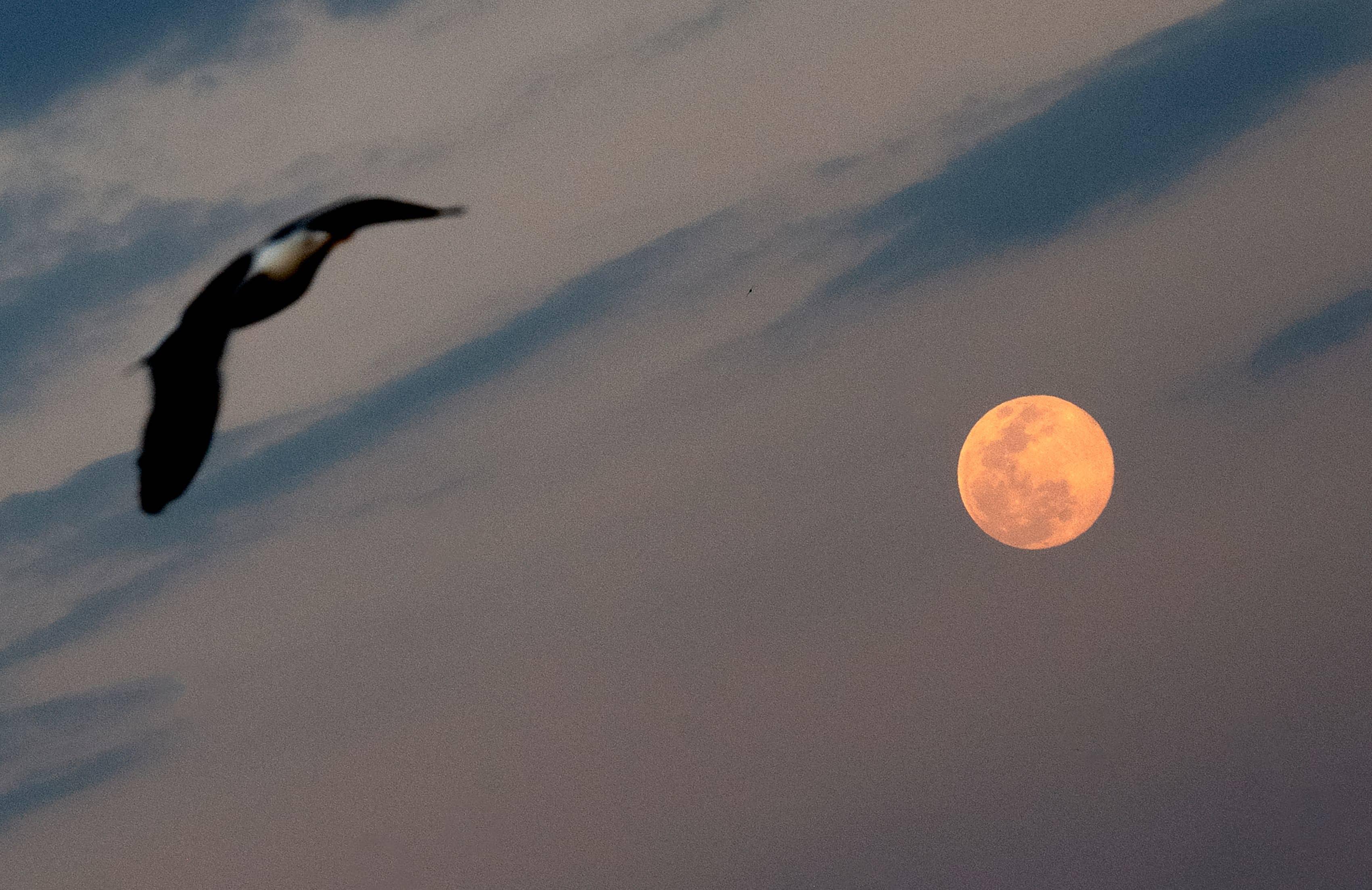 在義大利羅馬上空,老鷹與超級月亮組成魔幻的美景。(Getty Images)