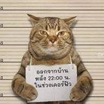 太可愛!虎斑貓違反宵禁 被警察逮捕「抱緊處理」