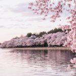 徵文:懷念與希望/驚恐的春天 幸好我們還擁有彼此