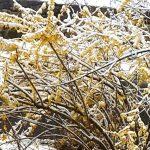 麻州周末可能降雪 下周持續低溫