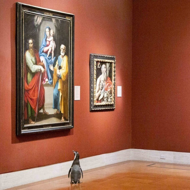 沒客人 企鵝放風逛博物館