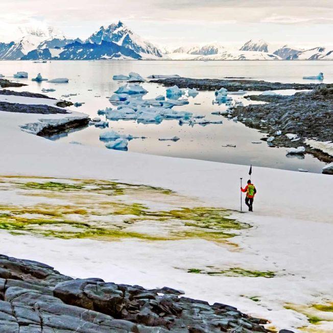 南極一些地區已經被微型藻類覆蓋,形成新的生態系統。(Getty Images)