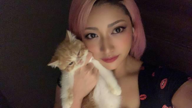 木村花先前連發貓咪照片都會被酸民嘲笑。(取材自推特)