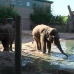 休城動物園 限預約遊2小時