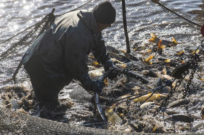 減少混獲可望保護環境以及漁民生計。圖為資料照片。(歐新社)