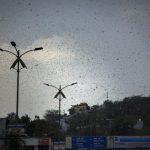 新冠疫情未過 蝗蟲大軍襲印度… 30年最嚴重