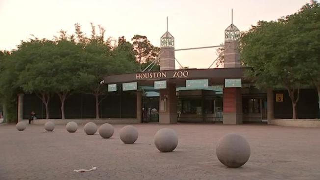休士頓動物園快要重新開放。(ABC13電視台)