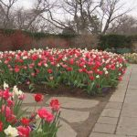 花迷有福!達拉斯植物園6月1日重開