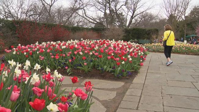 達拉斯植物園6月1日重新開放。(FOX4電視台)