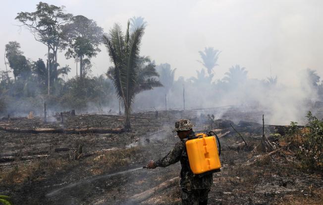 去年全球3塊大陸有大片原始雨林遭到焚毀,亞馬遜雨林更是重災區。(路透資料照片)