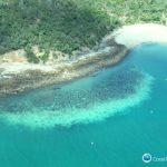 五年來第3度!大堡礁現最大規模珊瑚白化恐來不及復元