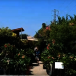 經營逾30年有成 頂峰花圃將轉讓
