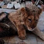 俄國幼獅被打斷腿供遊客合影 普亭震驚下令徹查