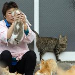 日本貓島被投毒 90貓只剩30隻