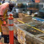 復工特價 華人超市海鮮便宜40% 防疫品超搶手