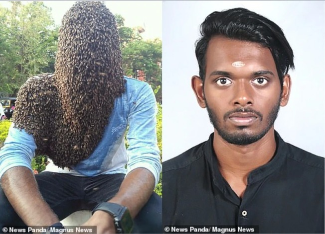 印度男好勇敢 6萬蜂敷臉4小時