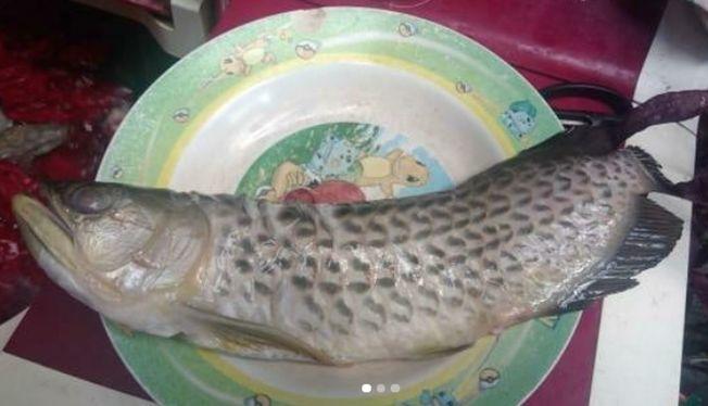 印尼男好崩潰養4年龍魚被父炸來吃