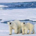 北極小鎮飆破38℃ 暖化異常 恐成新日常