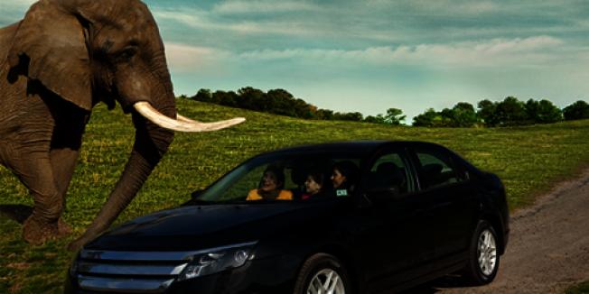 新州六旗野生動物園重新推出自駕遊。(取自動物園官網)