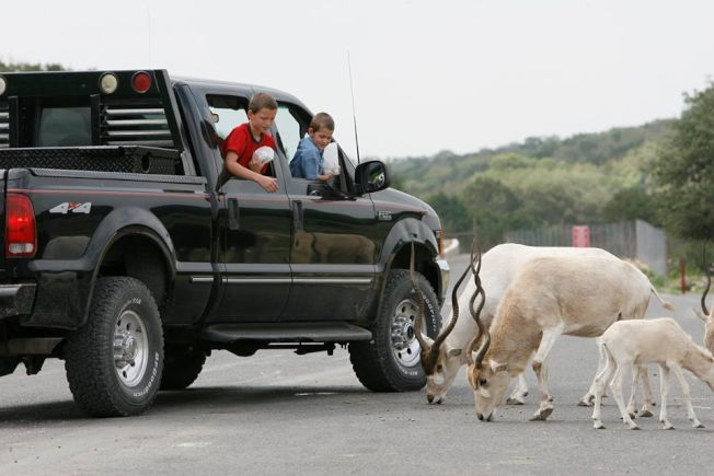 德州天然橋野生動物牧場此前允許投餵動物,但受疫情影響目前暫時禁止。(取自牧場臉書)