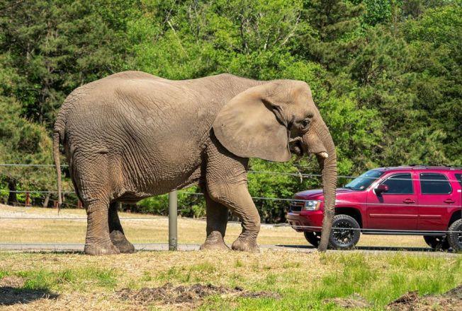 新州六旗野生動物園重新推出自駕遊。(取自動物園臉書)