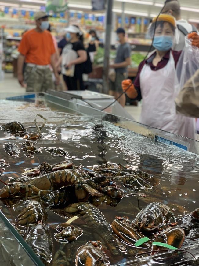 美國龍蝦因新冠疫情衝擊而減少出口、加大內銷,價格因此下降,在紐約市皇后區的華人超市,龍蝦每磅僅售6.99元,大受消費者歡迎。(記者曹健╱攝影)