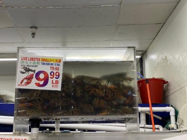 東岸龍蝦降價求售,但西岸尚未看到明顯滑落。(記者楊青/攝影)