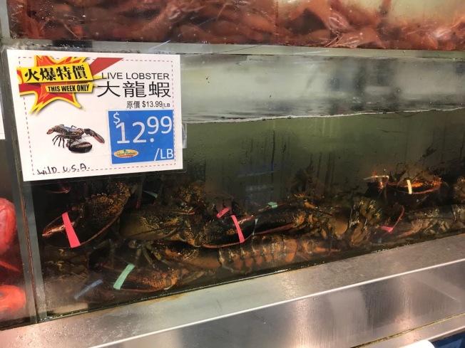 東岸龍蝦降價求售,西岸坐等跌價。(記者楊青/攝影)