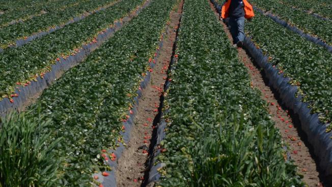 范杜拉縣奧克斯納市一家農場工人宿舍,出現新冠肺炎群聚感染,95位居民檢測呈陽性。(KTLA電視台)