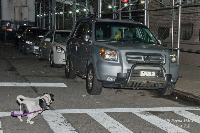 莱德斯·阿里·特倫切斯聯誼會正在讓寵物狗進行捕鼠行動。(取自R.A.T.S臉書)