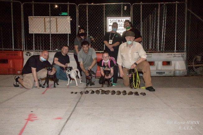 莱德斯·阿里·特倫切斯聯誼會正在讓寵物狗進行捕鼠行動。(圖片取自R.A.T.S臉書)