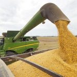 中國或緩購美國農產品 彭博:僅落實今年貿協19%