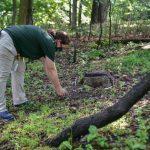 馬州「輪椅烏龜」康復 重返大自然