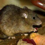 內蒙出現鼠疫死亡病例  發布防控3級預警