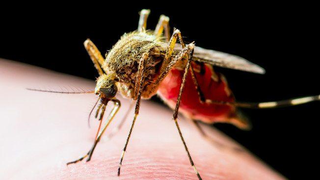 新州蚊虫数量 今夏将暴增