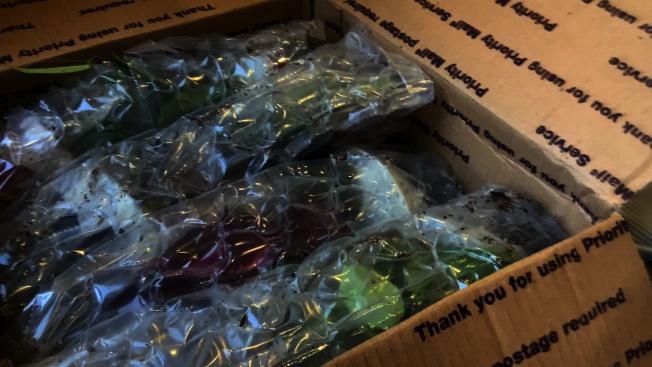 網購植物在郵寄過程中容易損壞,因此包裝很重要。(記者李雪/攝影)