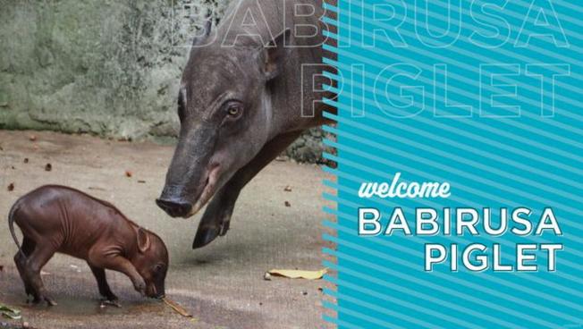 動物王國新出生的小豪豬(porcupette)。(迪士尼官網)