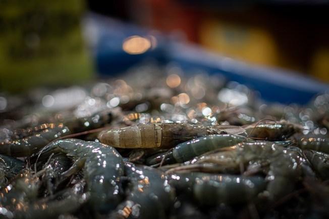 北京新發地市場爆出疫情後,中國海關對進口冷凍食品展開監測,在從厄瓜多生產的冷凍白蝦外包裝樣本中,檢出新冠病毒核酸陽性。(示意圖,取材自Pixabay圖庫)