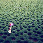 吳郭魚挖出「洞洞草原」 夢幻美景爆紅