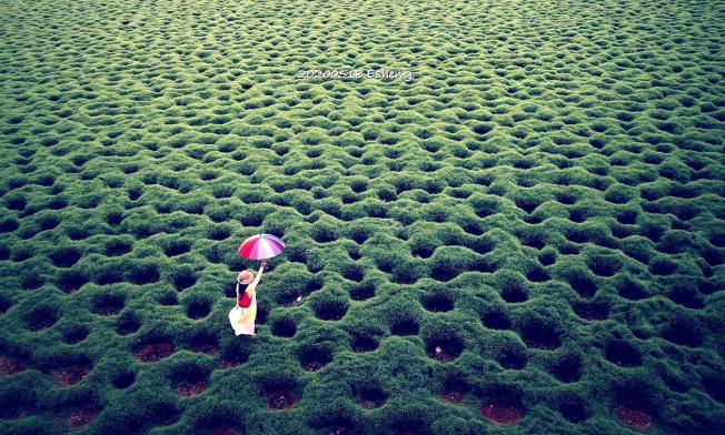 嘉義太保市魚塭景色夢幻,被網友稱為「洞洞草原」。(中央社/黃一盛提供)