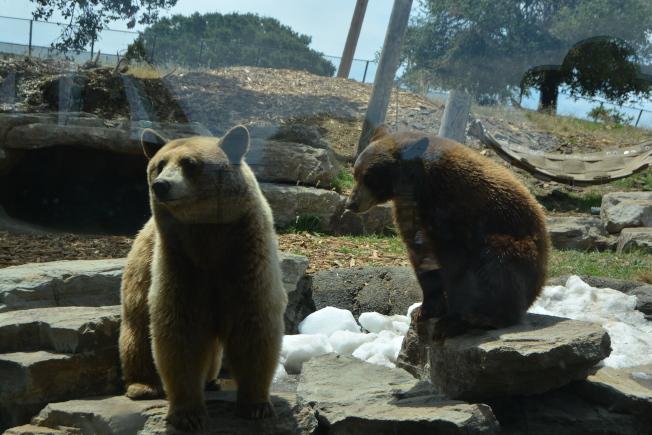 因為居家避疫而暫時不對公眾開放的屋崙動物園,每月損失200萬收入。嚴重的財務困境下,或面臨永久關閉。(記者劉先進 /攝影)