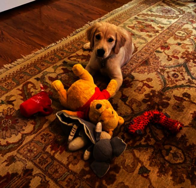 美國國務卿龐培歐在推特發布的愛犬與牠的最愛玩具照中,小熊維尼也入列。截自龐培歐推特