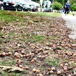 去秋橡果充裕 今夏新英格蘭花栗鼠猖獗
