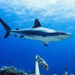 紐約長島海灘27日現鯊魚 緊急關閉水域