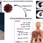 線上健康講座…心血管患者染疫機率高 醫師教你自保