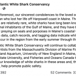 慘!緬因首現大白鯊咬人致死 目擊者稱慘烈 官方發警告
