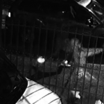 紐約兩青少年中槍身亡 悼念夜又爆槍戰